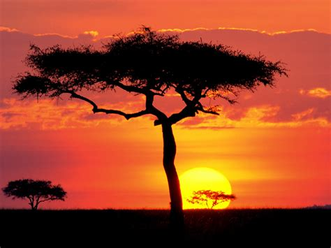 Sentinel Safaris   Safaris in East Africa tailored to your
