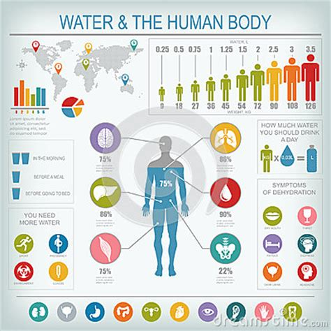 Water And Human Body Infographic Stock Vector - Image