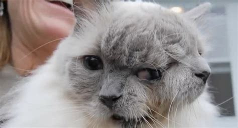 """People are amazed when they see this cat with """"two faces"""""""