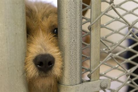 Bell County Animal Shelter - Temple Daily Telegram: Gallery